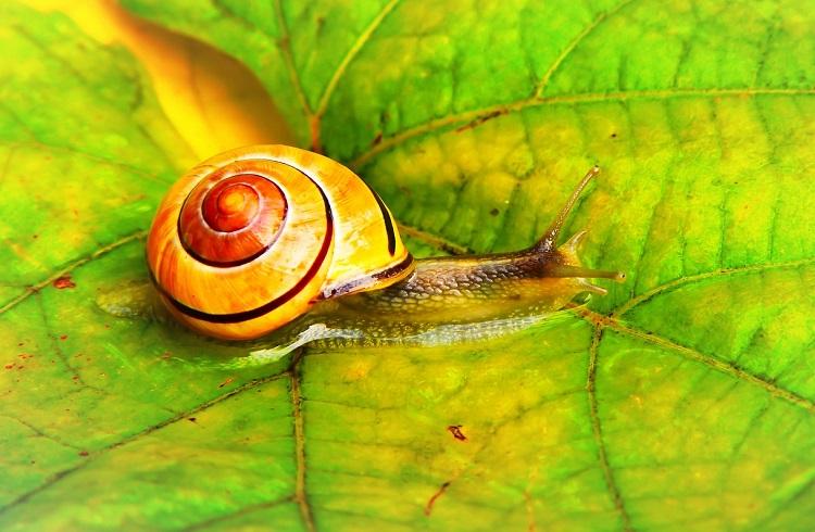 Snail Farm – avis, effet secondaire, composition